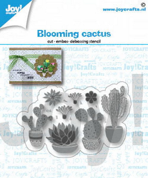 Joy Stans - blooming cactus