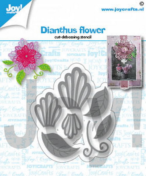 Joy Stans - Dianthus Flower